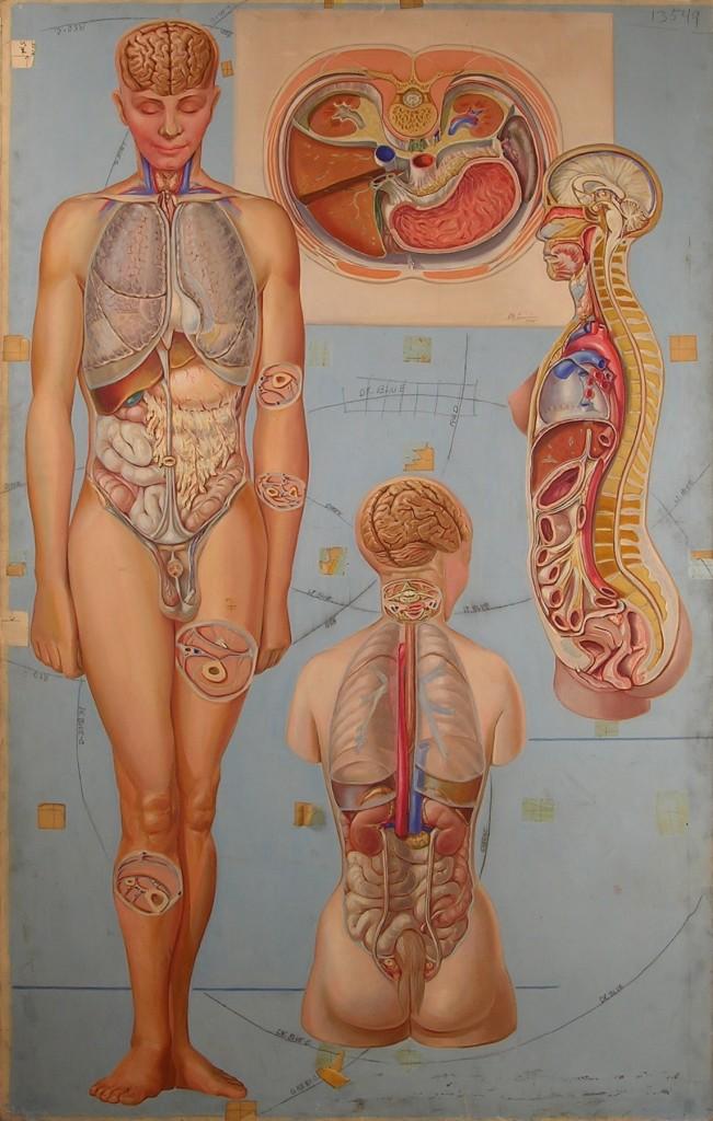Pauline Lariviere - Med in ArtMed in Art