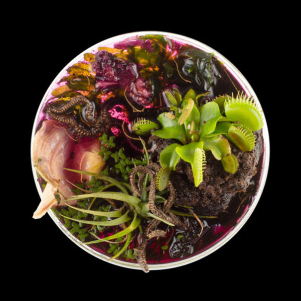 """Vanitas in a Petri Dish""_Suzanne Anker_New York (17/09 – 23/10/2016)"